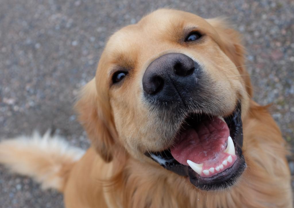 Free Dog Behaviour Articles - By Dog Behaviourist Charlotte Bryan