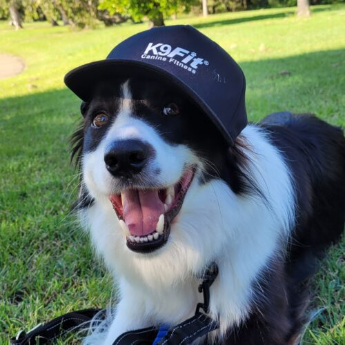 K9Fit The Best Dog Products For Your Dog