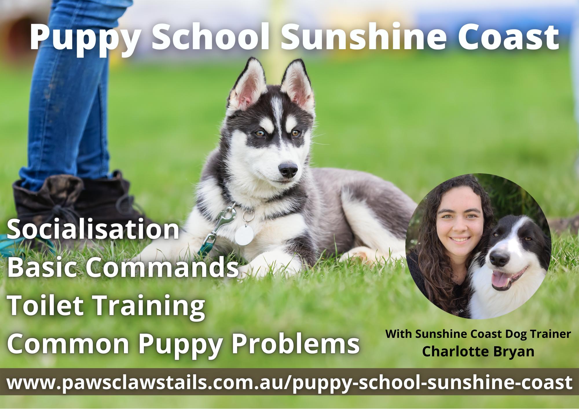 Best Puppy School Sunshine Coast