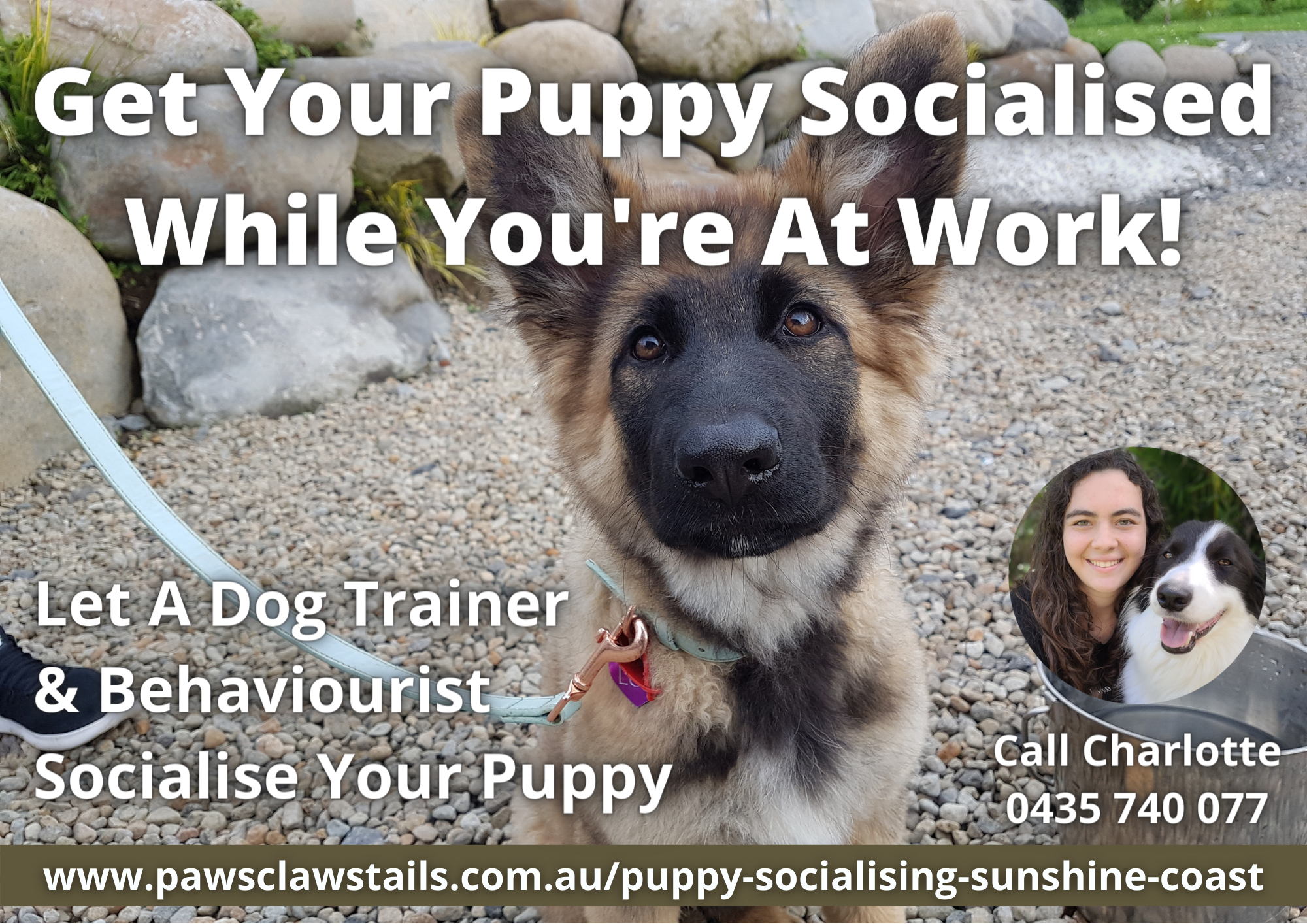 How To Socialise Your Puppy - Puppy Socialisation Sunshine Coast