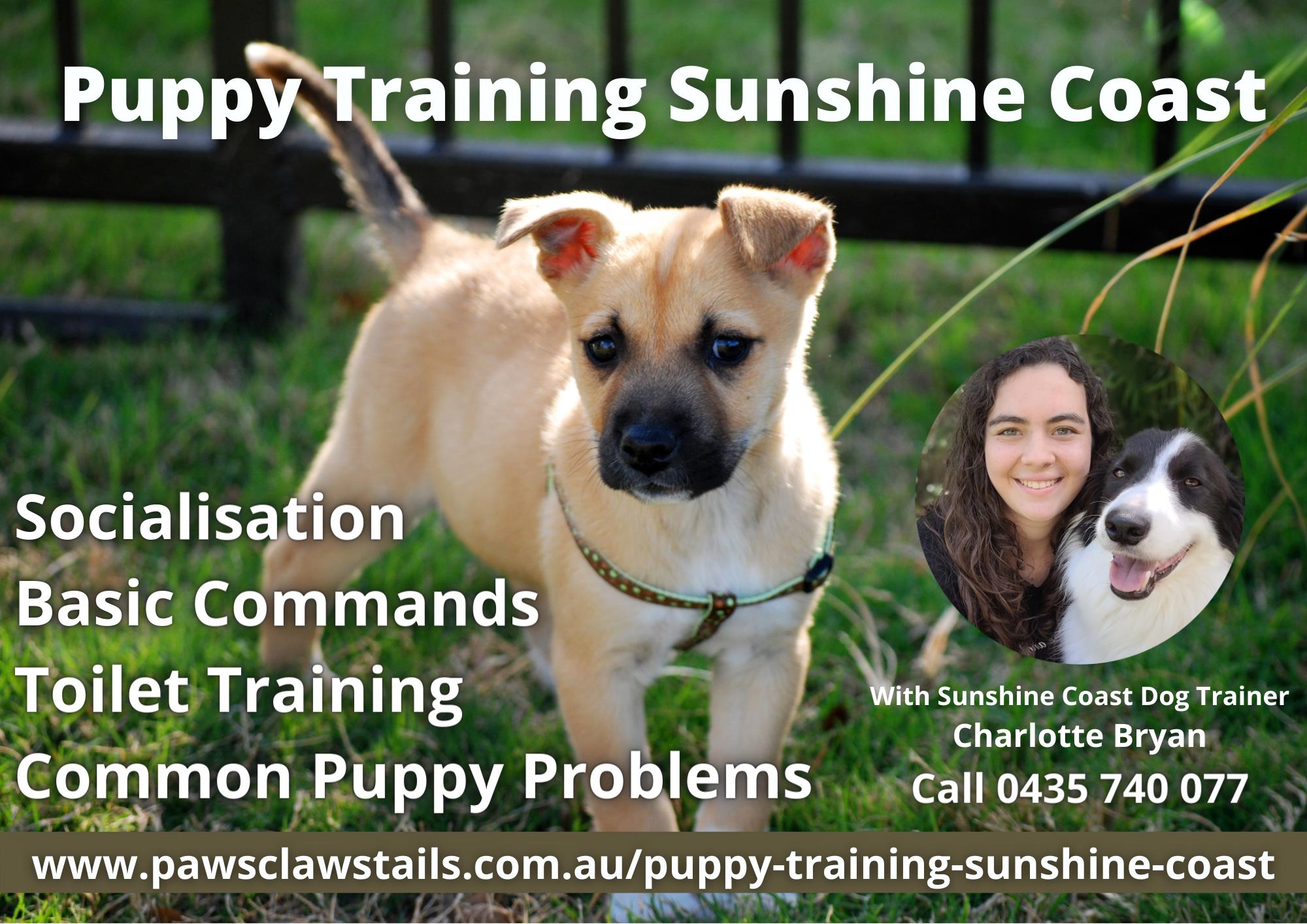 Puppy Trainer Sunshine Coast - Best Puppy Trainer
