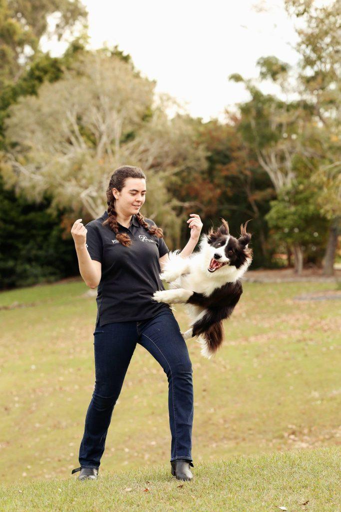 Dog Trick Classes on the Sunshine Coast