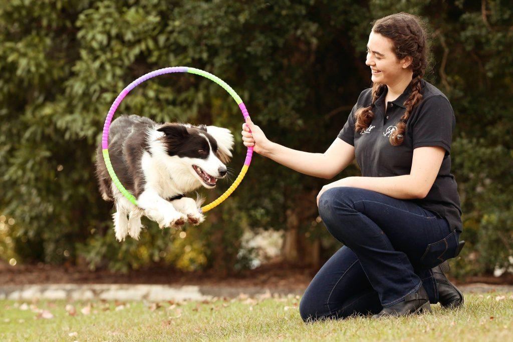 Dog Trick Classes Sunshine Coast