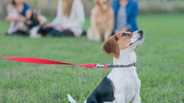Dog Training & Behaviour Workshops on the Sunshine Coast