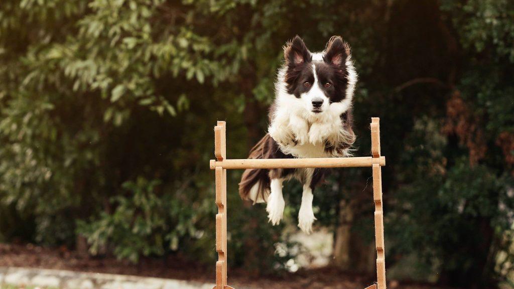 Sunshine Coast Dog Agility - Charlotte Bryan