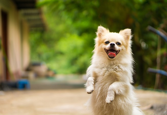 Read How To Reduce Your Dogs Anxiety With Anti-Anxiety Treats